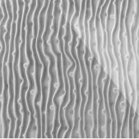 3D Стекло Tree серебро 600х600х5мм